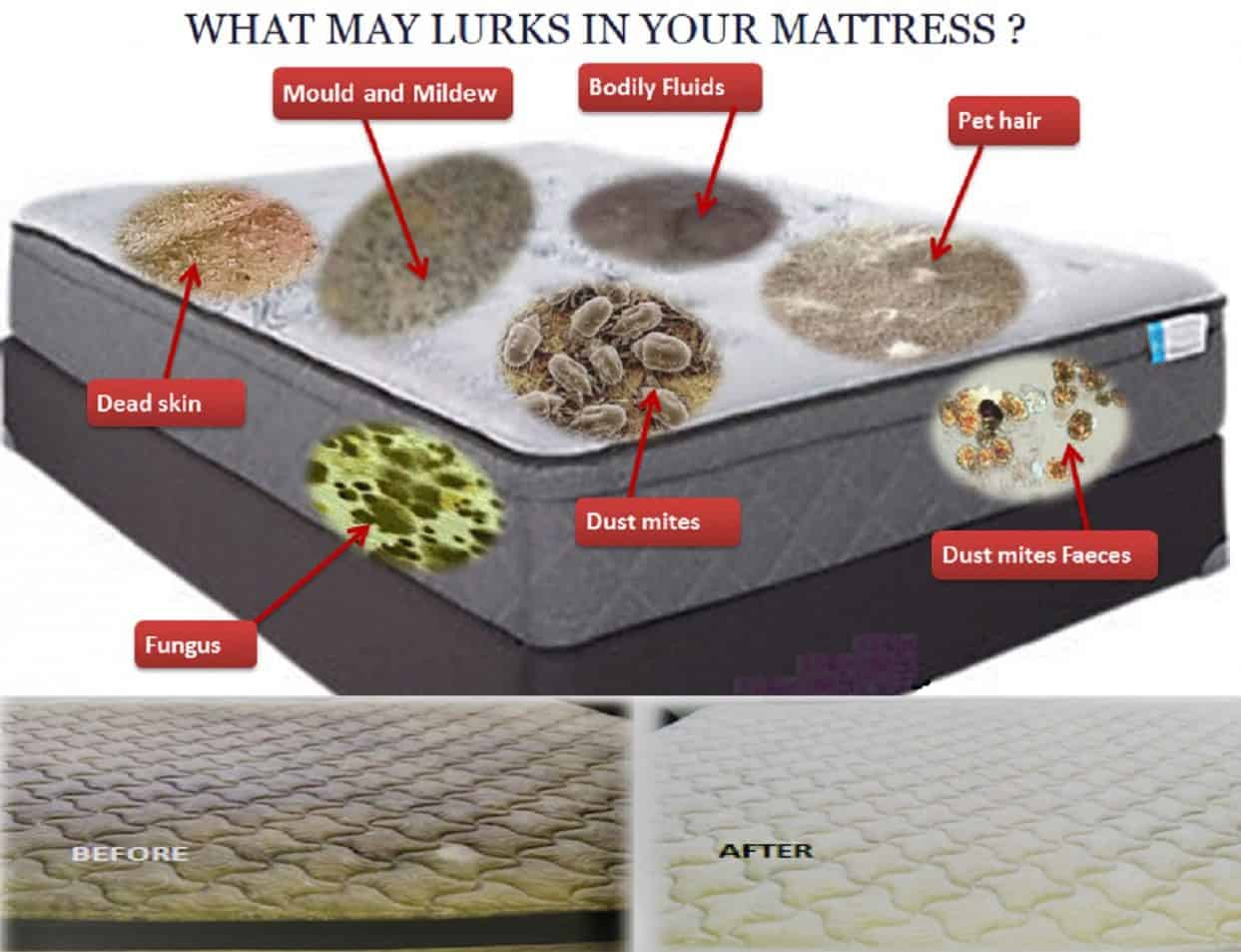 Book Mattress Cleaning Auckland